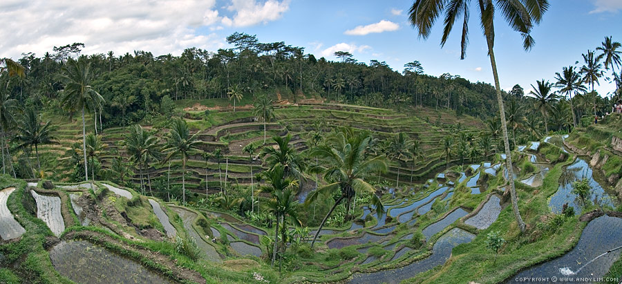 Tegalalang_Rice_Terraces_Pano